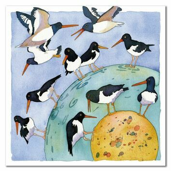 Emma Ball Oystercatchers Galore II Greetings Card