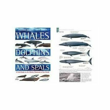 Whales Dolphins and Seals by Hadoram Shirihai