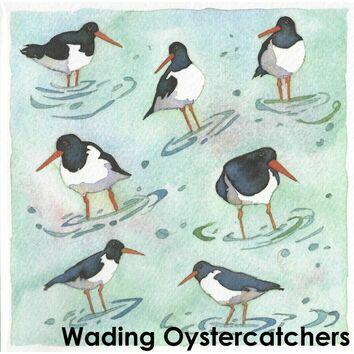Emma Ball Wading Oystercatchers Single Coaster