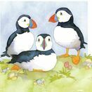 Emma Ball Puffins Mini Cards (Pack of 10) additional 2